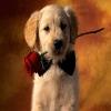 Animal Love Puzz