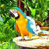 Jigsaw: Parrot