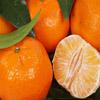Jigsaw: Peeled Mandarin