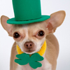St Patrick's Day Jigsaw Puzzle